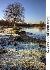 blaues, winter, gefrorenes, landschaftsbild, himmelsgewölbe, see, betäuben, eisig, banken, gras, sonnenaufgang
