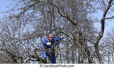 blaues, zweige, apfelbaum, aus, himmelsgewölbe, schere, professionell, gärtner, garnierung