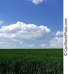 blauw groen, gras, hemel, fris