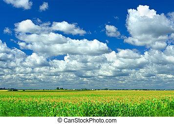blauwe , akker, koren, hemel