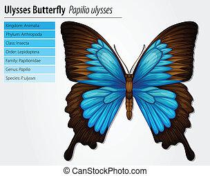 blauwe berg, swallowtail