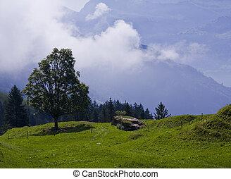 blauwe berg, weide, alpien, wolken, boompje, plant, grasland, op grote hoogte, hemelen, pieken
