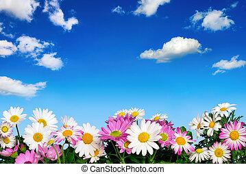 blauwe bloem, hemel, bed