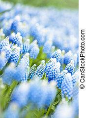 blauwe bloemen, achtergrond