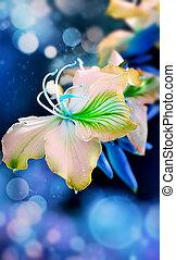 blauwe , bokeh, achtergrond, orchidee