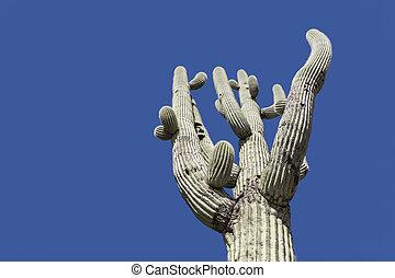 blauwe , boompje, cactus, hemel