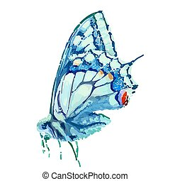 blauwe , butterfly.