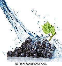 blauwe , druif, met, water, gespetter, vrijstaand, op wit