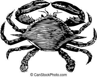 blauwe , gravure, (callinectes, hastatus), krab