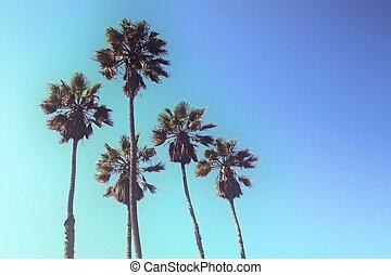 blauwe , groep, hemel, tegen, palmbomen, omhoog, gestyleerd, groot, aanzicht, retro
