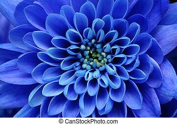blauwe , hart, bloem, aster, op, gele, kroonbladen, textuur,...