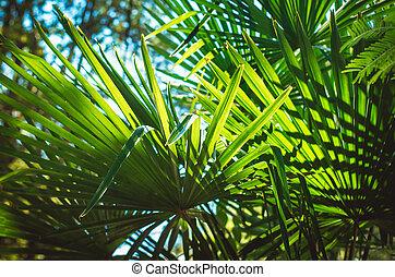 blauwe hemel, bladeren, boompje, palm, achtergrond