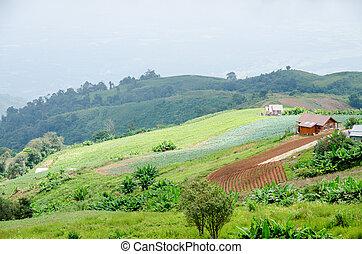 blauwe hemel, groene heuvel
