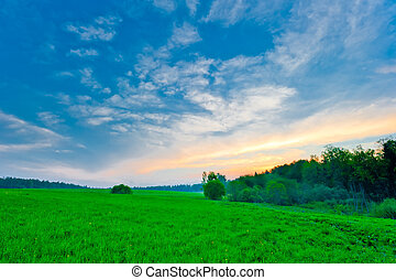 blauwe hemel, helder, groene, fris, gras
