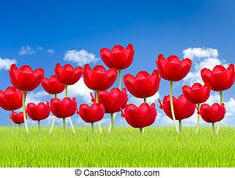 blauwe hemel, tulp, groene achtergrond, gras, rood