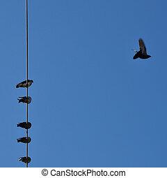 blauwe hemel, vogels