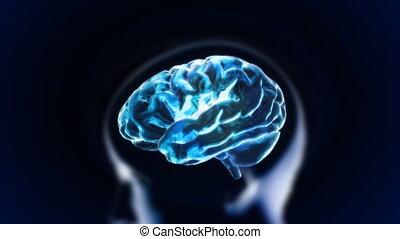 blauwe , hersenen, hoofd, gedeelte, gloed