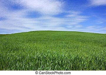 blauwe , heuvel, gras, hemel
