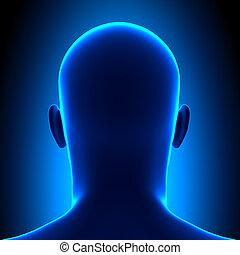 blauwe , hoofd, -, back, anatomie, aanzicht, con