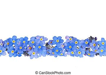 blauwe, lente, bloem, grens