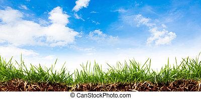 blauwe , lente, hemel, groene, fris, gras