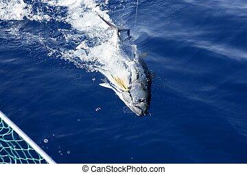 blauwe , middellandse zee, visserij, vrijgave, tonijn, vin