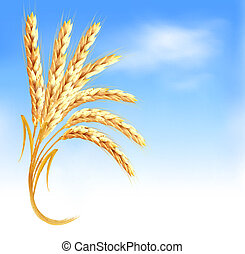 blauwe , oor, voorkant, vector, tarwe, illustration., sky.