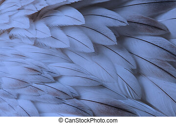 blauwe , pluizig, veer, closeup