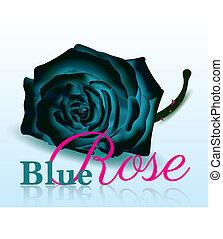 blauwe roos, op wit, achtergrond, met, tekst