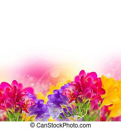 blauwe , roze, freesia, bloemen, gele