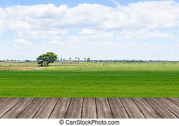 blauwe , ruimte, houten, montage., hemel, of, akker, terras, tafel, rijst, display., jouw, lege