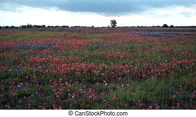blauwe , slag, platteland, muts, wildflowers, schudden,...