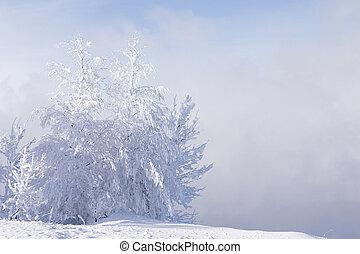blauwe , snowdrift, bevroren, hemel, bomen, eenzaam, mist, ...