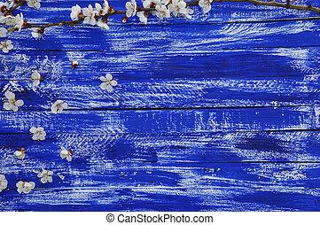 blauwe , tak, kersenboom, achtergrond, bloesems