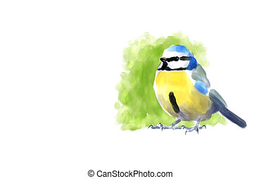 blauwe tit, watercolor
