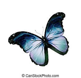 blauwe , vlinder, grunge, vliegen, vrijstaand, witte