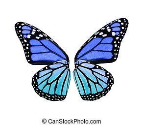 blauwe , vlinder, vleugels