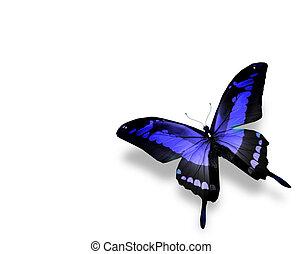 blauwe , vlinder, vrijstaand, achtergrond, witte