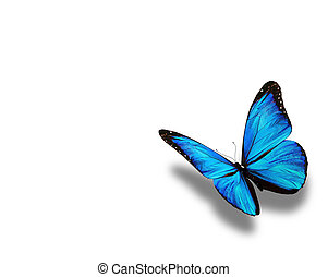 blauwe , vlinder, vrijstaand, op wit