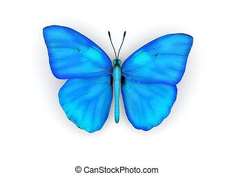 blauwe , vlinder, vrijstaand