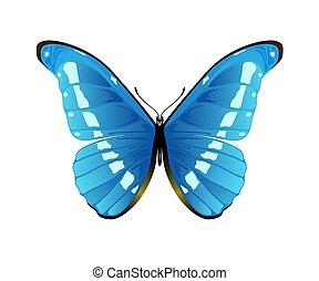 blauwe , vlinder, witte achtergrond