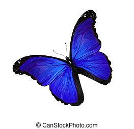 blauwe , vlinder, witte , vliegen, vrijstaand