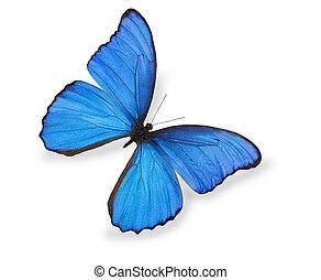 blauwe , vlinder, witte , vrijstaand