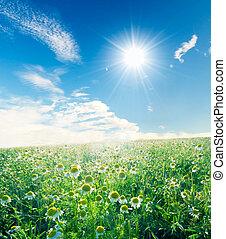 blauwe , weide, lente, hemel, zonnig, onder