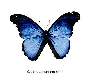 blauwe , witte , grunge, vrijstaand, vlinder