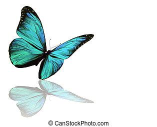 blauwe , witte , vrijstaand, achtergrond, vlinder