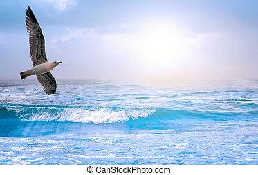 blauwe , zeezicht, zeemeeuw, hemel, zonopkomst