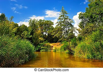 blauwe , zomer, hemel, bos, onder, rivier
