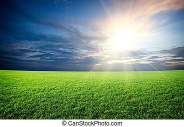 blauwe , zon, hemel, groen veld, ondergaande zon , onder, fris, gras