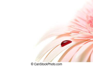 bleeding daisy